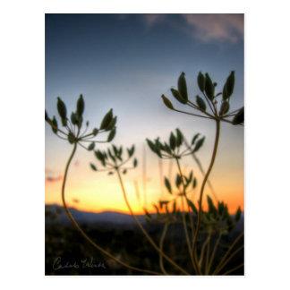 Sattel-Felsen-Sonnenuntergang Postkarte