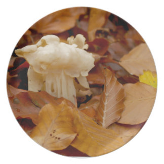 SATTELcommon helvel des weißen Sattels Elfen Melaminteller