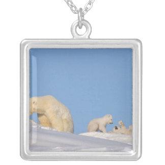 Sau des polaren Bären, die auf Gras füttert, um Versilberte Kette