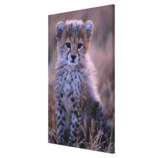 Savanne Gepard-CUBs |, Kenia Leinwanddruck