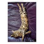 Savanne-Katzen-Schlafenkarte Karte