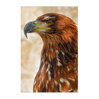 Savanneadler Acryl Wandkunst