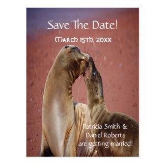 Save the Date Seelöwen Postkarte