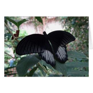 Scarlet-Frack-Schmetterling Notecard Karte