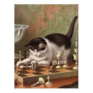 Schach-Katzenpostkarte Postkarte