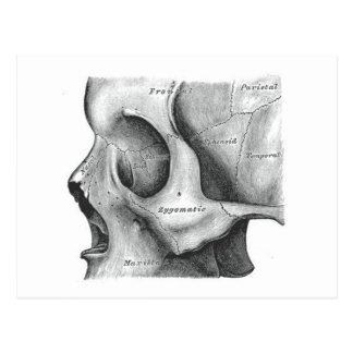 Schädel und Dornpostkarte Postkarte