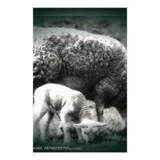 Schaf- und Lammmonobild Briefpapier