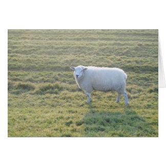 Schafe auf dem Gebiet Karte
