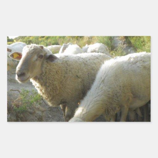 Schafe Rechteckige Sticker