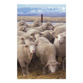 Schafe Briefpapier