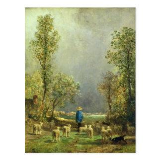 Schafe, die einen Sturm aufpassen Postkarte
