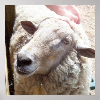 Schafe die guter Schäfer-christliche Kunstphotogra Poster