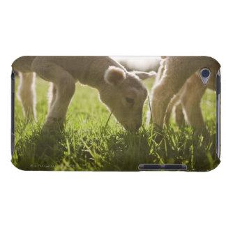 Schafe, die im Gras weiden lassen iPod Case-Mate Hülle