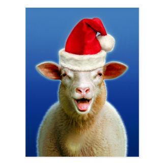 Schafe im Weihnachtsfieber Postkarte