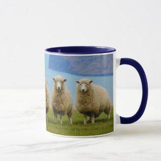 Schafe in einer Reihe mit der Tasse