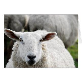 Schafe Karte
