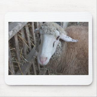 Schafe mit Heu Mousepad