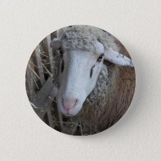Schafe mit Heu Runder Button 5,1 Cm