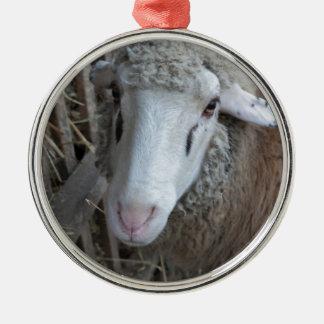 Schafe mit Heu Rundes Silberfarbenes Ornament