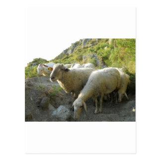 Schafe Postkarten