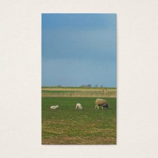 Schafe und Lämmer Wiesen-in der kleinen Foto-Karte Visitenkarte