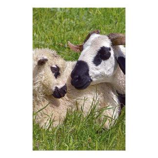 Schafe von Thones und von Marthod Briefpapier