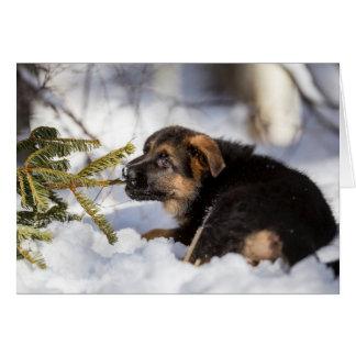 Schäferhund, der Kieferniederlassung zieht Karte