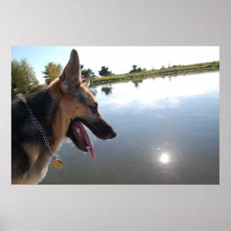 Schäferhund/Genießen der Ansicht Poster