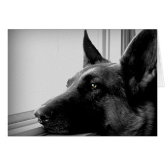 Schäferhund-Gruß-Karte Grußkarte