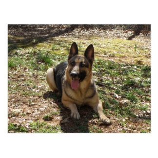 Schäferhund-Hundepostkarte Postkarte