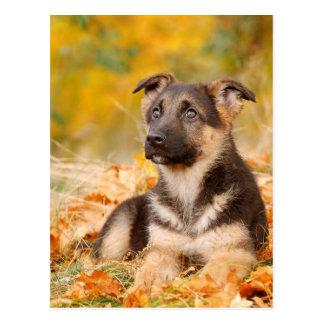 Schäferhund-Hundewelpe des Herbstes Postkarte
