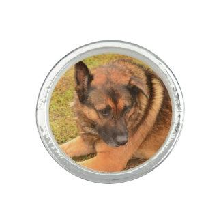 Schäferhund mit einem schlaffen Ohr Foto Ringe