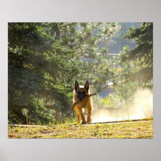 Schäferhund-Plakat Poster