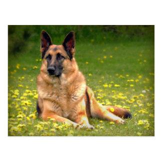Schäferhund-Postkarte Postkarte