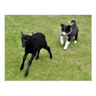 Schäferhund-Welpen-Training mit schwarzem Lamm Postkarte