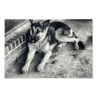 Schäferhund-Zucht-Funktions-Hund Retro Fotodruck