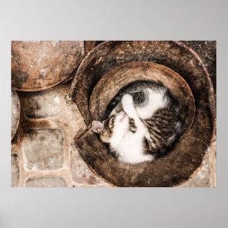 Schaffen Sie Ihre Selbst - Katzen-Nickerchen Poster