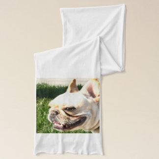 Schal der französischen Bulldogge