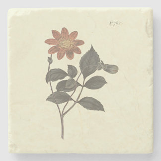Scharlachrot blühte Dahlie-botanische Illustration Steinuntersetzer