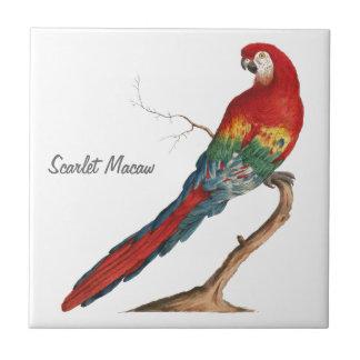 Scharlachrot des Macaw-, Ara Macao Keramikfliese