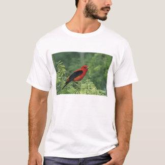 Scharlachrot des Tanager-, Piranga olivacea, Mann T-Shirt
