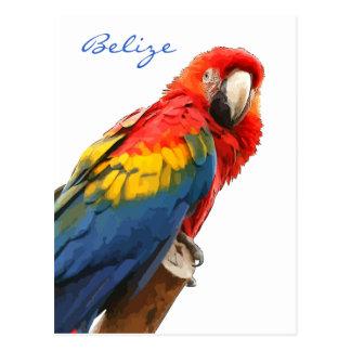 Scharlachrot Macaw-Belize-Postkarten- Postkarte