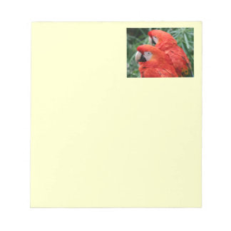 Scharlachrot Macaw- Notizblock