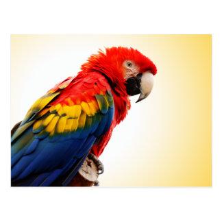 Scharlachrot Macaw- Postkarte