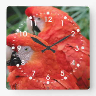 Scharlachrot Macaw- Quadratische Wanduhr