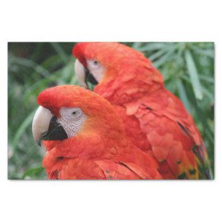 Scharlachrot Macaw- Seidenpapier