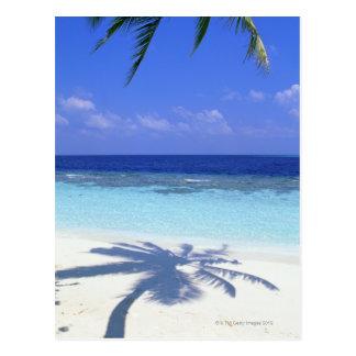Schatten der Palme Postkarte