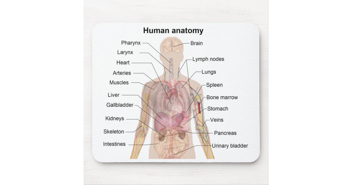 Schatten-Diagramm der menschlichen Anatomie Mauspad | Zazzle