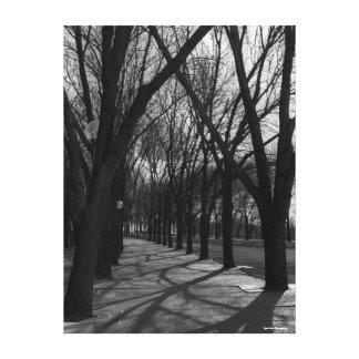 Schatten und Bäume Leinwanddruck