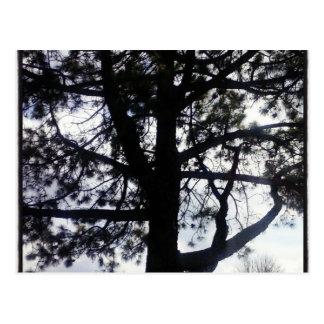 Schattenhafte Kiefer-Postkarte Postkarte